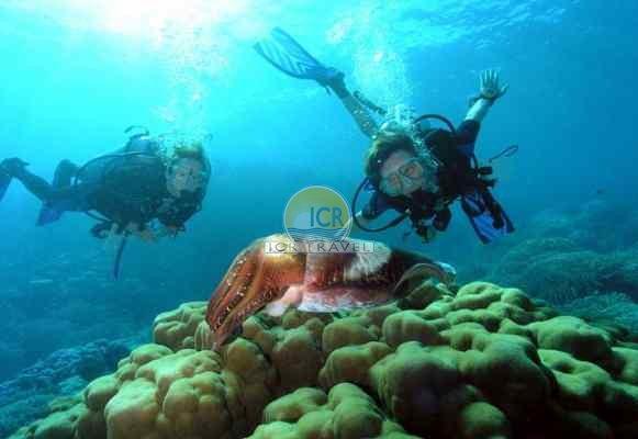 Book Icmeler Scuba Diving Excursion Icmeler Excursions